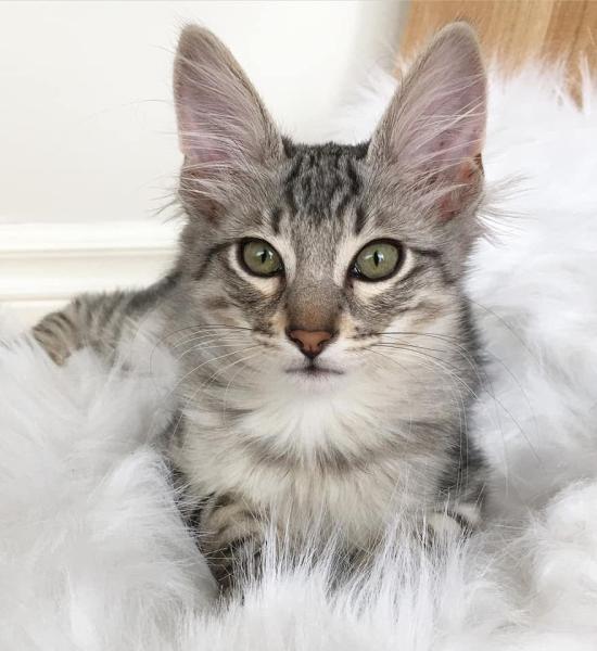 #1 Best Kitten