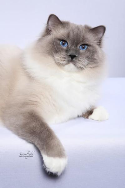 #1 Best Cat